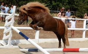 Vigor Champion 2013 saut