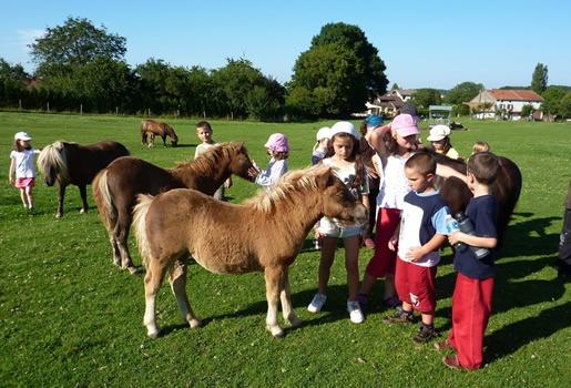 Le shetland entouré d'enfants