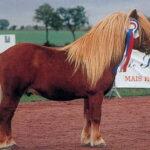 GoodLuck Champion de France