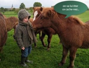 Les Shetlands avec Tom