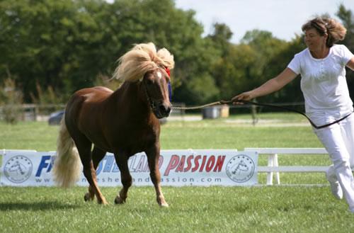 Ursus Champion France FSP 2012