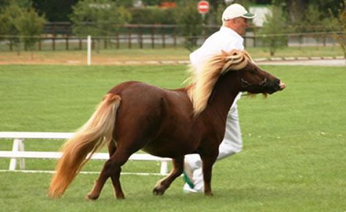 Tennessee Championne suprême FSP 2010