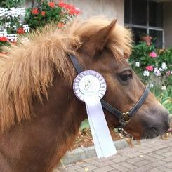 Ursus Champion d'Europe