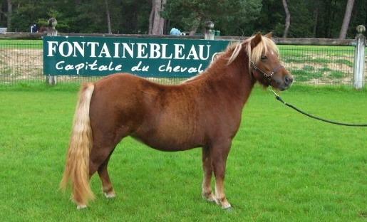 Championnat de France Fontainebleau