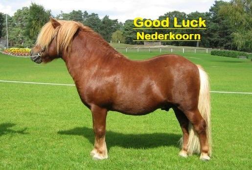 Etalon Good Luck