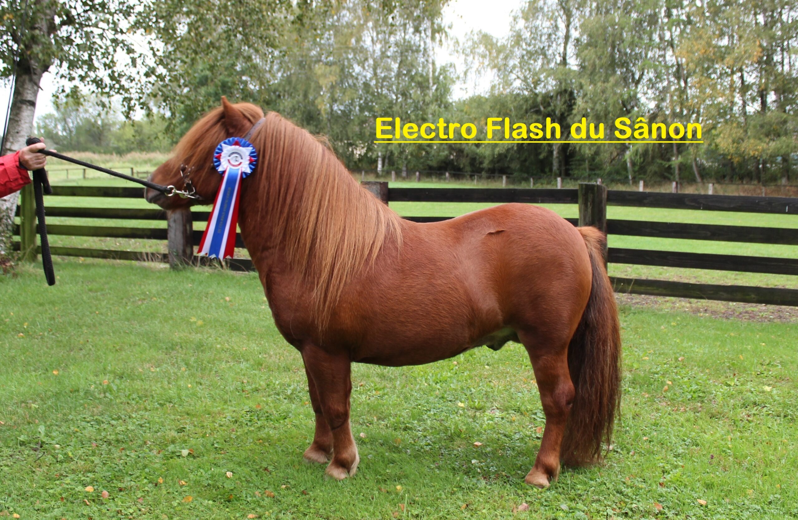 Etalon ElectroFlash